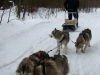Dog Sledding Tour